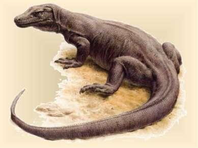 Это чудовище похоже на дракона, длина которого достигает почти 3 метра, живёт...