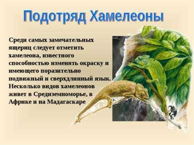 Среди самых замечательных ящериц следует отметить хамелеона, известного спосо...