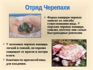 Форма панциря черепах зависит от способа существования вида. У морских черепа...