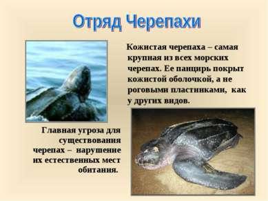 Главная угроза для существования черепах – нарушение их естественных мест оби...