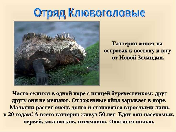 Часто селится в одной норе с птицей буревестником: друг другу они не мешают. ...