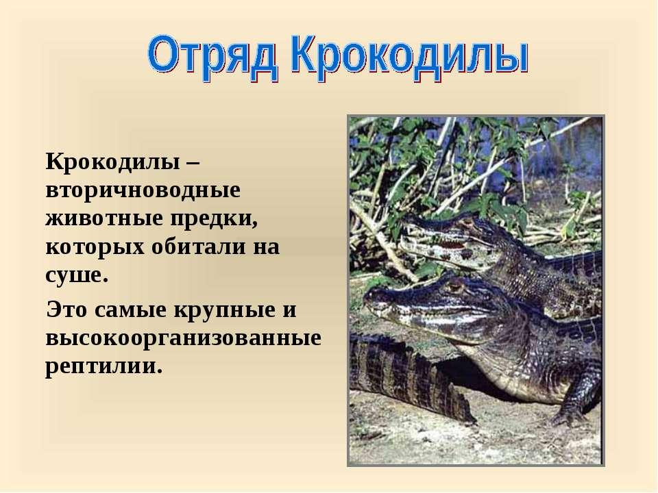 Крокодилы – вторичноводные животные предки, которых обитали на суше. Это самы...