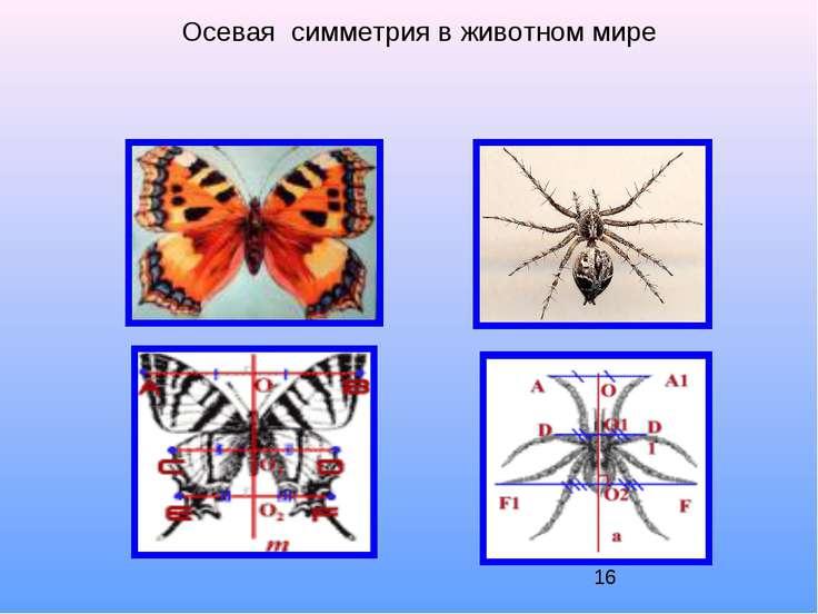 Осевая симметрия в животном мире
