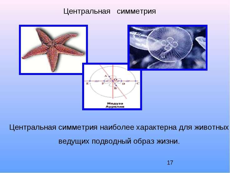 Центральная симметрия Центральная симметрия наиболее характерна для животных,...