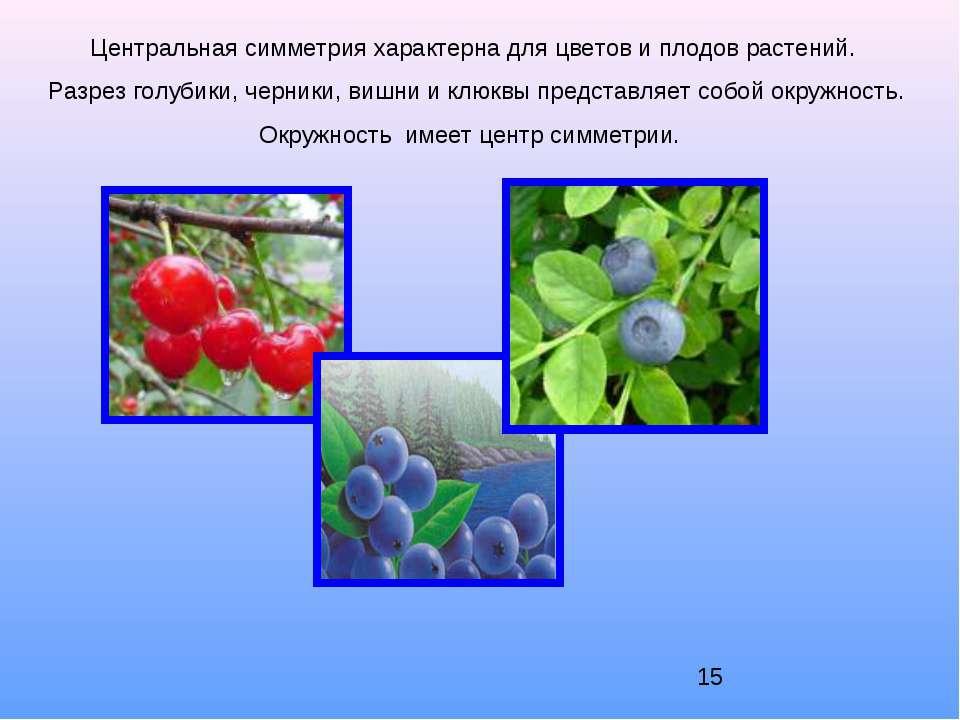 Центральная симметрия характерна для цветов и плодов растений. Разрез голубик...