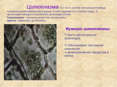 Цитоплазма- это часть клетки, находящаяся между плазматической мембраной и яд...