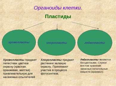 Органоиды клетки. Пластиды хромопласты хлоропласты лейкопласты Хромопласты пр...