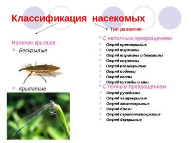 Классификация насекомых Наличие крыльев Бескрылые Крылатые * С неполным превр...