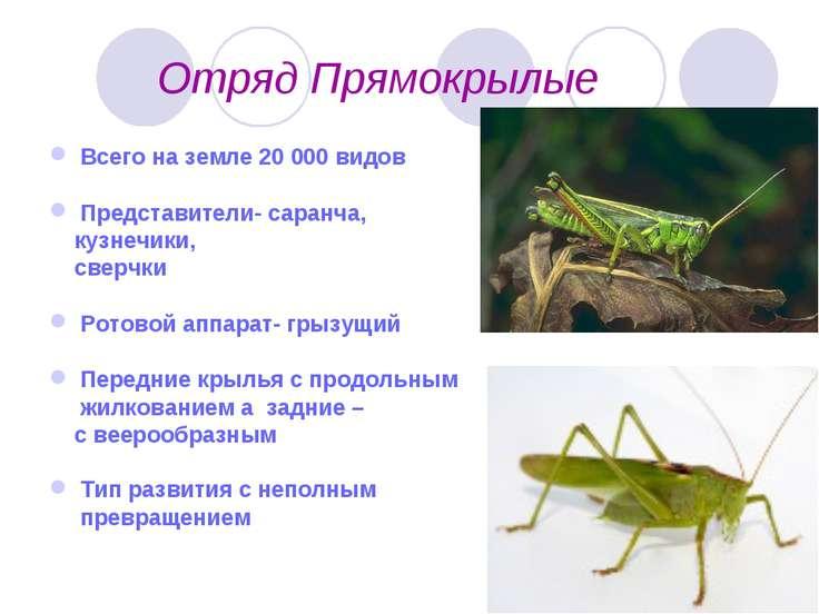 Отряд Прямокрылые Всего на земле 20 000 видов Представители- саранча, кузнечи...