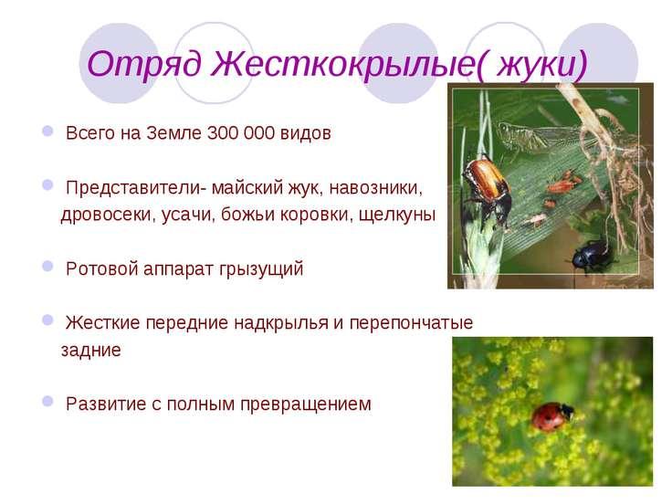 Отряд Жесткокрылые( жуки) Всего на Земле 300 000 видов Представители- майский...