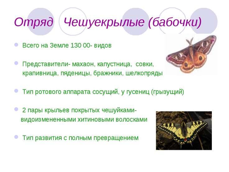 Отряд Чешуекрылые (бабочки) Всего на Земле 130 00- видов Представители- махао...