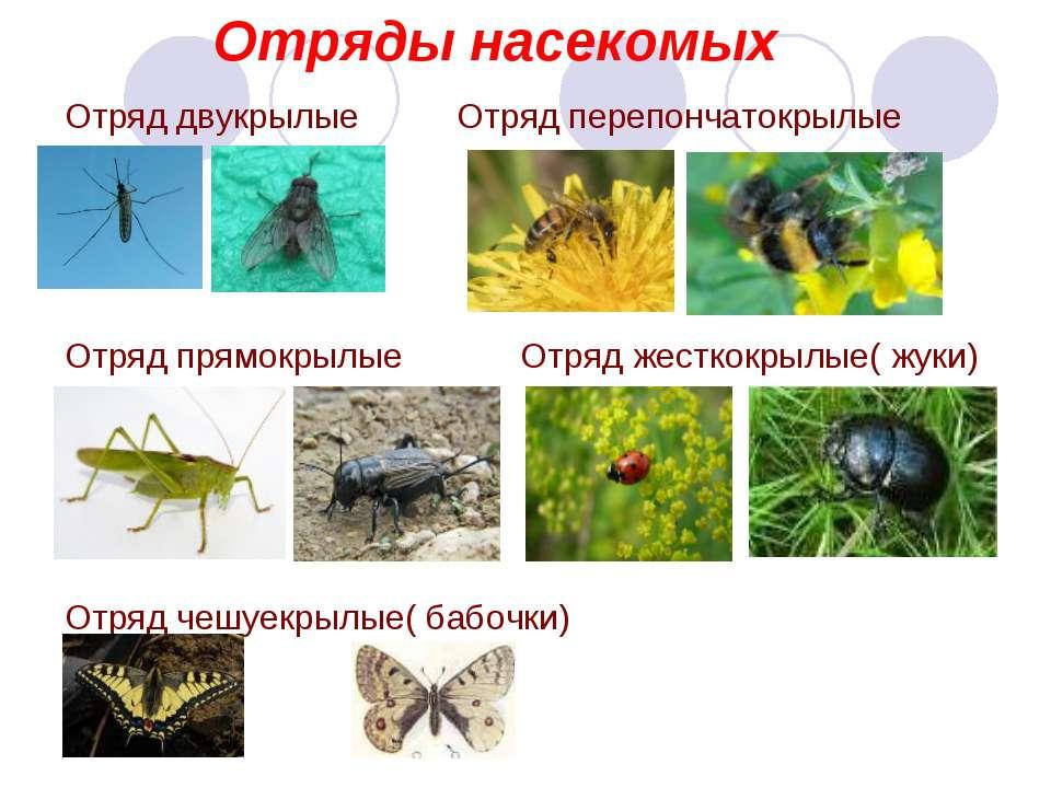 На класс презентация биология 7 насекомых отряды тему