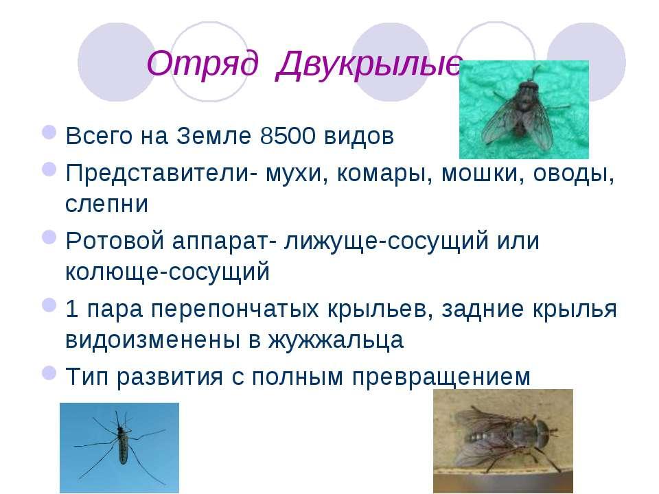 Отряд Двукрылые Всего на Земле 8500 видов Представители- мухи, комары, мошки,...