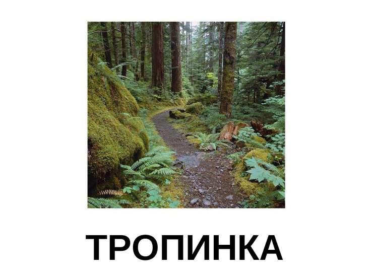 ТРОПИНКА