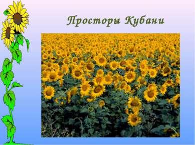 Просторы Кубани