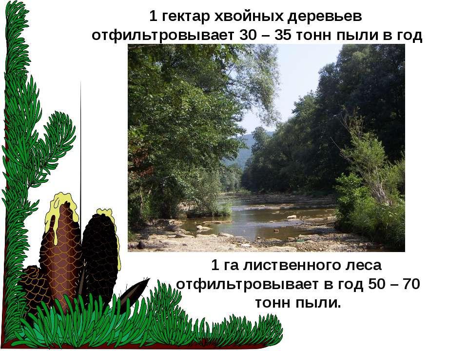 1 гектар хвойных деревьев отфильтровывает 30 – 35 тонн пыли в год 1 га листве...