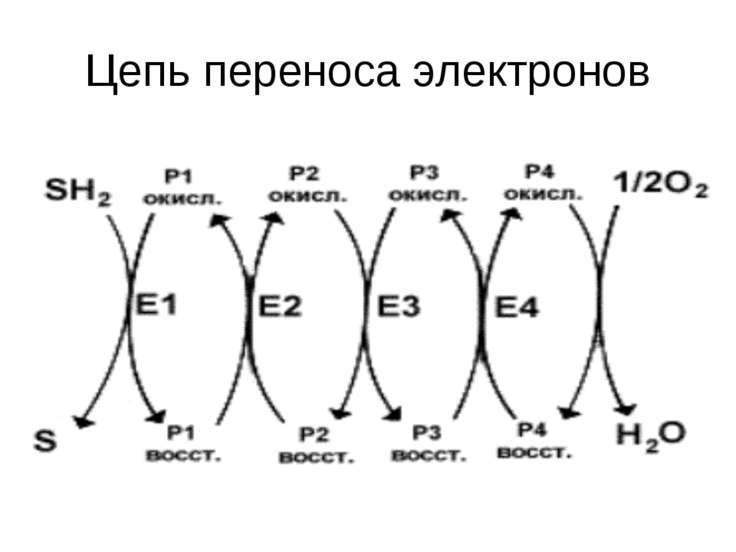 Цепь переноса электронов