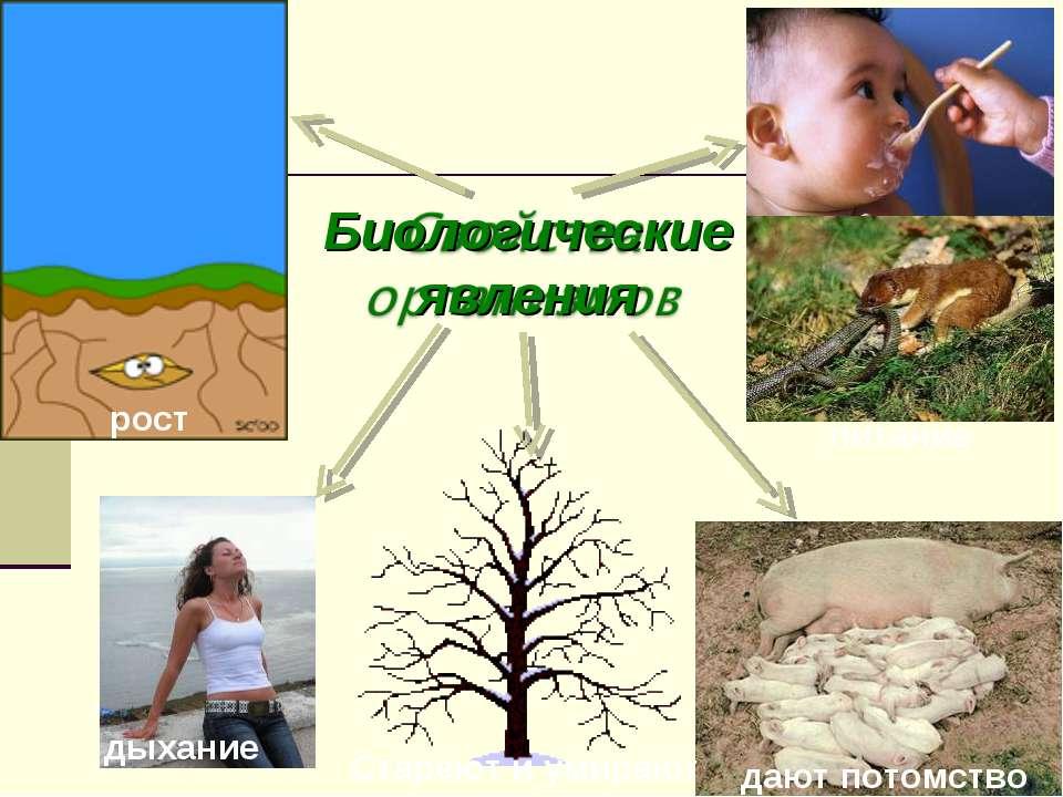 Биологические явления