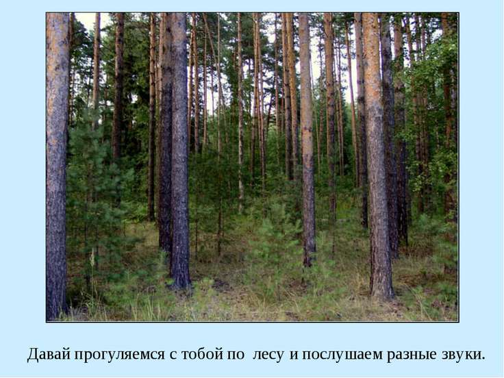 Давай прогуляемся с тобой по лесу и послушаем разные звуки.