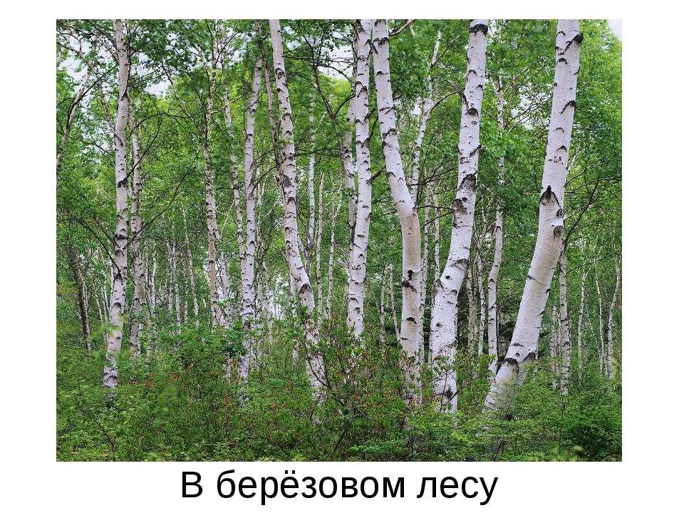 В берёзовом лесу