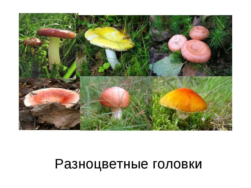 Разноцветные головки