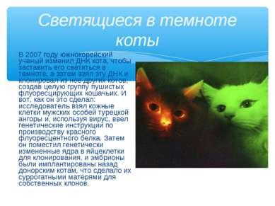 В 2007 году южнокорейский ученый изменил ДНК кота, чтобы заставить его светит...