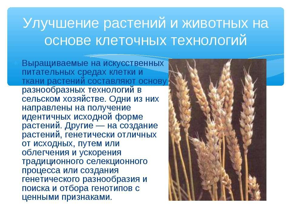 Выращиваемые на искусственных питательных средах клетки и ткани растений сост...
