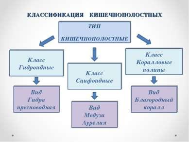 КЛАССИФИКАЦИЯ КИШЕЧНОПОЛОСТНЫХ ТИП КИШЕЧНОПОЛОСТНЫЕ Класс Гидроидные Класс Сц...