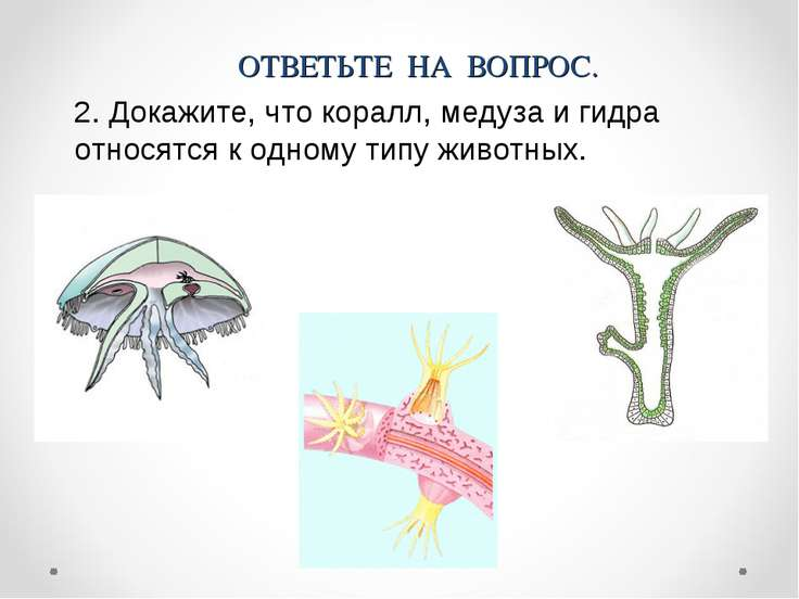 2. Докажите, что коралл, медуза и гидра относятся к одному типу животных. ОТВ...