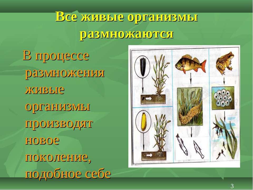 Все живые организмы размножаются В процессе размножения живые организмы произ...