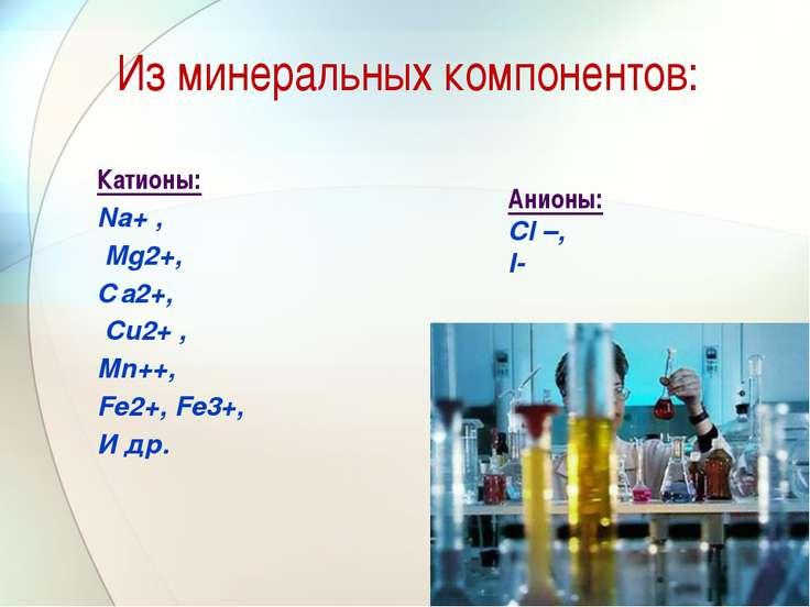 Из минеральных компонентов: Катионы: Na+ , Mg2+, Са2+, Cu2+ , Мn++, Fe2+, Fe3...