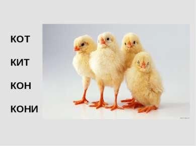 КОТ КИТ КОН КОНИ
