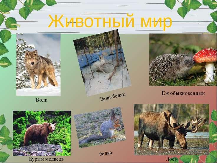 Еж обыкновенный Заяц-беляк Волк Лось белка Бурый медведь Животный мир