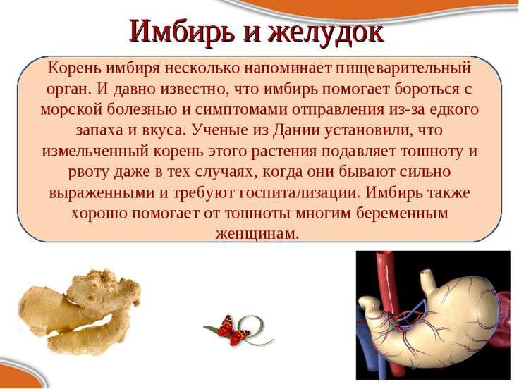 Имбирь и желудок Корень имбиря несколько напоминает пищеварительный орган. И ...