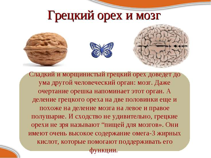 Грецкий орех и мозг Сладкий и морщинистый грецкий орех доведет до ума другой ...