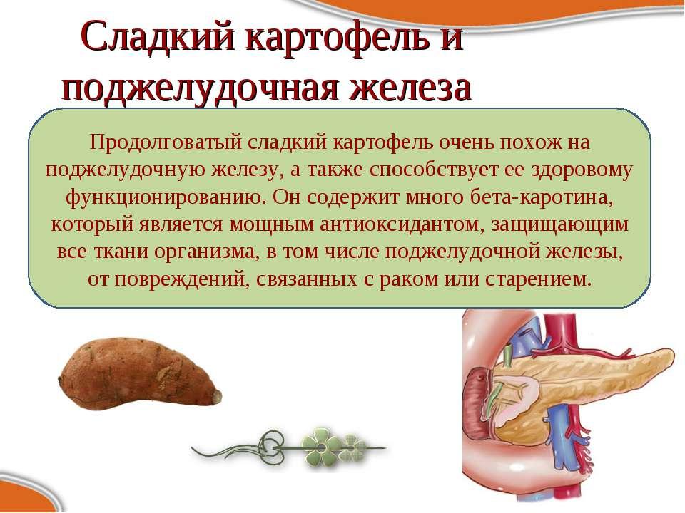 Сладкий картофель и поджелудочная железа Продолговатый сладкий картофель очен...