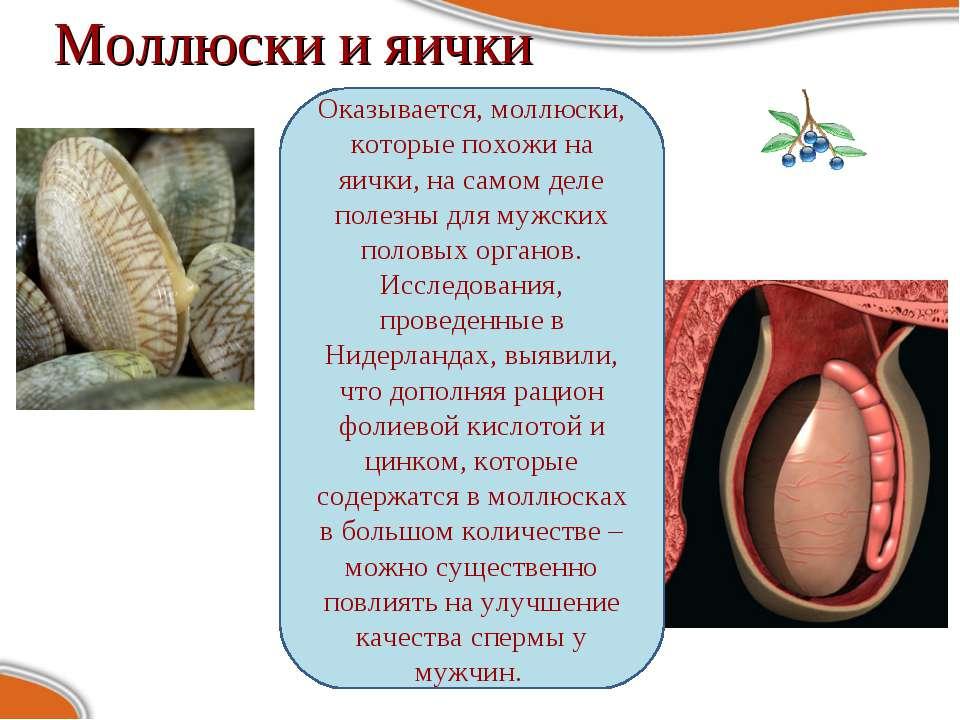 Моллюски и яички Оказывается, моллюски, которые похожи на яички, на самом дел...