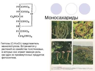 Гептозы (С7Н14О7) представитель манногептулоза. Встречается у растений из сем...