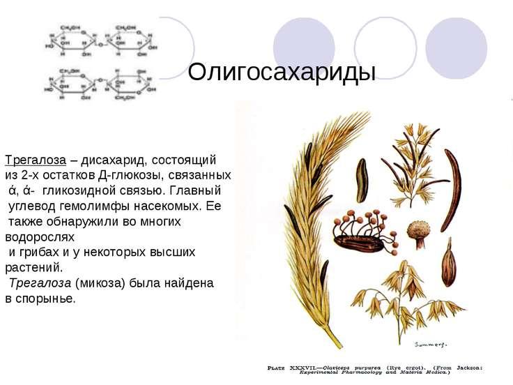 Олигосахариды Трегалоза – дисахарид, состоящий из 2-х остатков Д-глюкозы, свя...