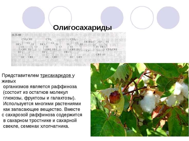 Олигосахариды Представителем трисахаридов у живых организмов является раффино...