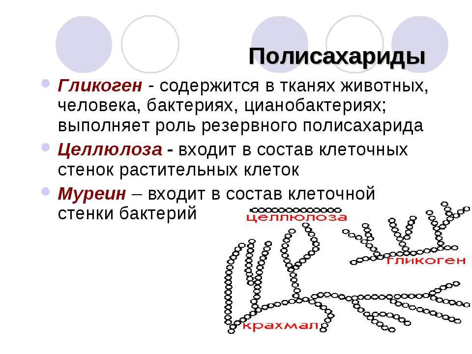 Полисахариды Гликоген - содержится в тканях животных, человека, бактериях, ци...