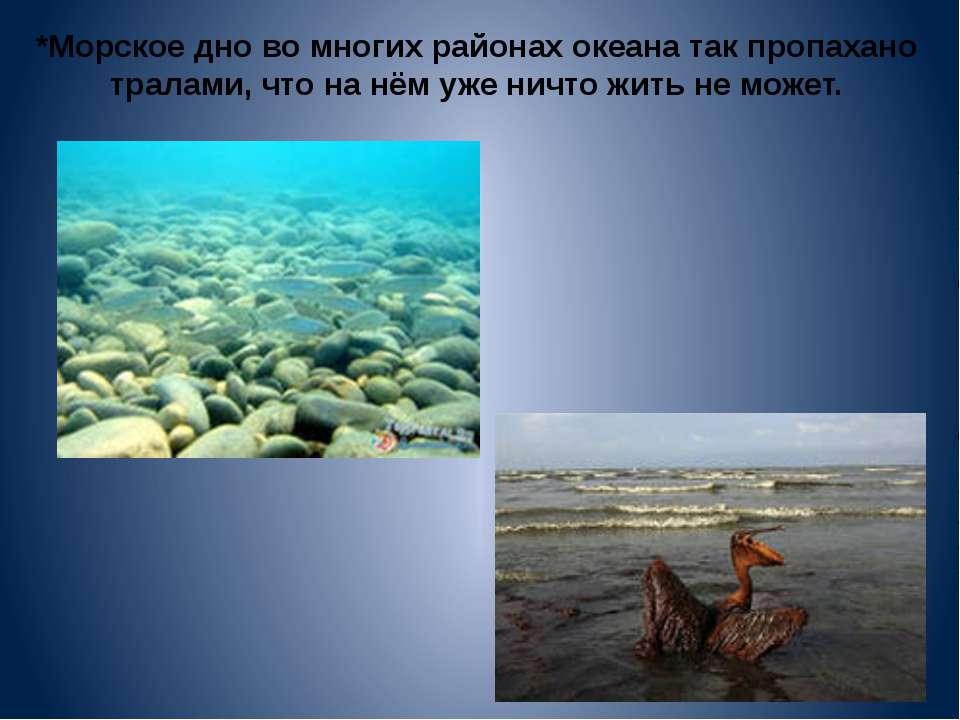 *Морское дно во многих районах океана так пропахано тралами, что на нём уже н...