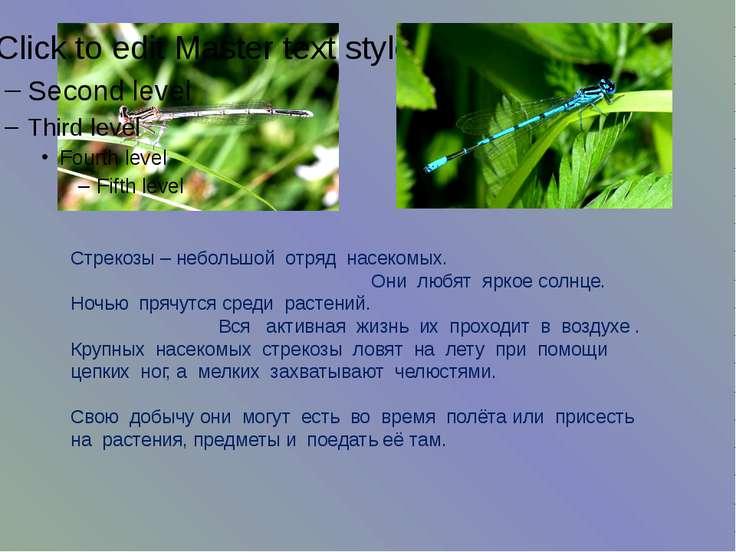 Стрекозы – небольшой отряд насекомых. Они любят яркое солнце. Ночью прячутся ...