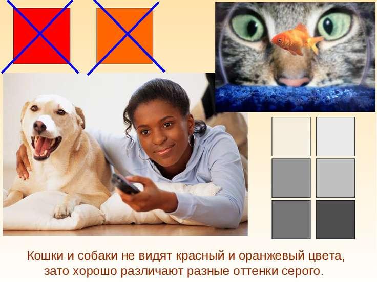 Кошки и собаки не видят красный и оранжевый цвета, зато хорошо различают разн...