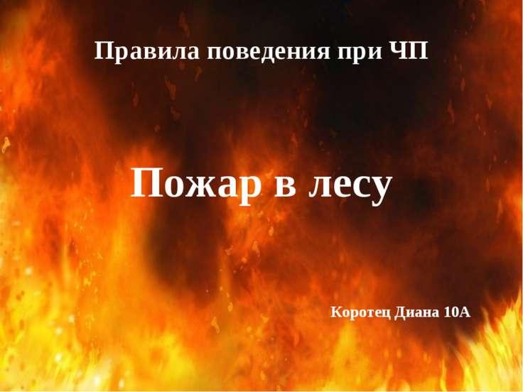 Правила поведения при ЧП Пожар в лесу Коротец Диана 10А