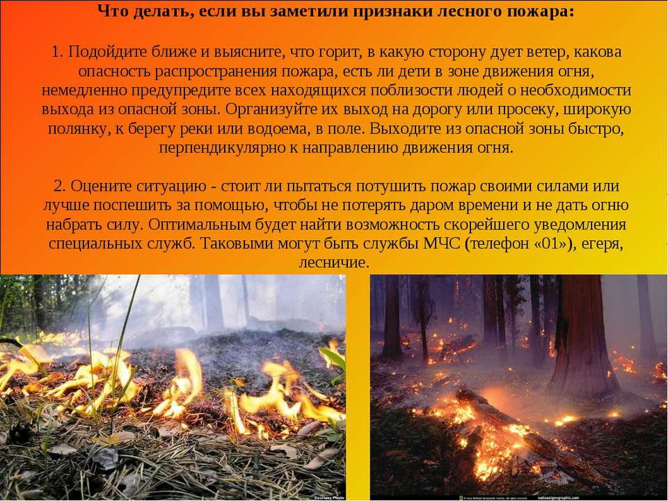 Что делать, если вы заметили признаки лесного пожара: 1. Подойдите ближе и вы...