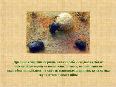 Древние египтяне верили, что скарабеи создают себя из неживой материи — возмо...
