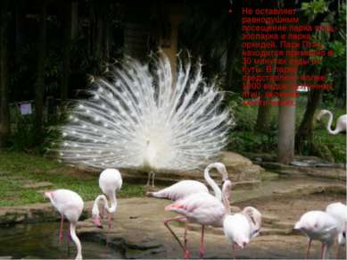 Не оставляет равнодушным посещение парка птиц, зоопарка и парка орхидей. Парк...