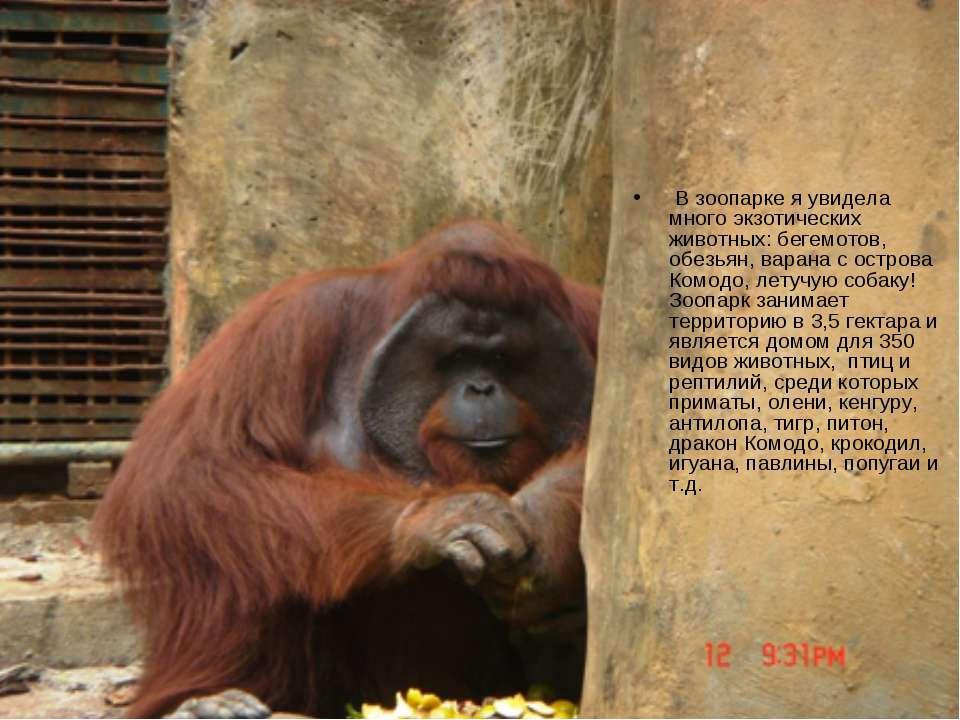 В зоопарке я увидела много экзотических животных: бегемотов, обезьян, варана ...