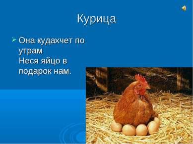 Курица Она кудахчет по утрам Неся яйцо в подарок нам.